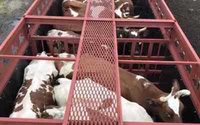 Скотовоз Перевозка Скота - Рязань, цены, предложения специалистов